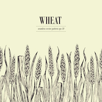 Field of wheat vector seamless pattern. vintage hand drawn illustration. can be use for bread packaging, beer labels