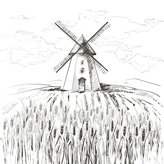 Field of wheat and windmill