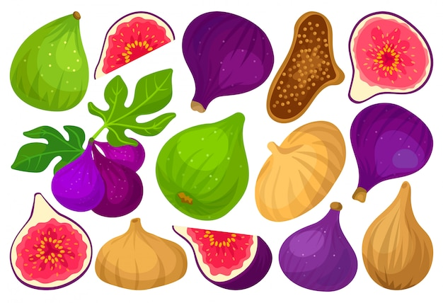 Fig  cartoon set icon.  illustration fruit on white background.  cartoon set icon fig.