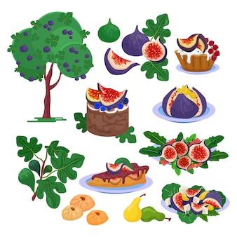 イチジクの新鮮なフルーティーな食品と熟したイチジク健康的な有機甘いデザートイラスト鮮度の葉と白い背景で隔離のエキゾチックな天然フルーツダイエットのイチジクの木のセット