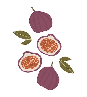 イチジクフルーツ夏のフルーツイラスト