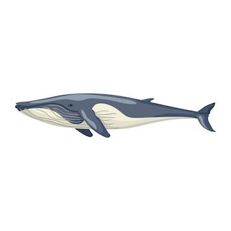 지느러미 고래 흰색 배경에 고립입니다. 어린이를 위한 바다의 만화 캐릭터. 해양 포유류와 함께 간단한 인쇄.