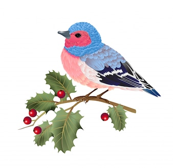 Finch bird sitting on holly twig. For banners, posters, leaflets and brochures.