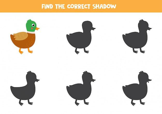 Find the correct shadow of cute cartoon duck.