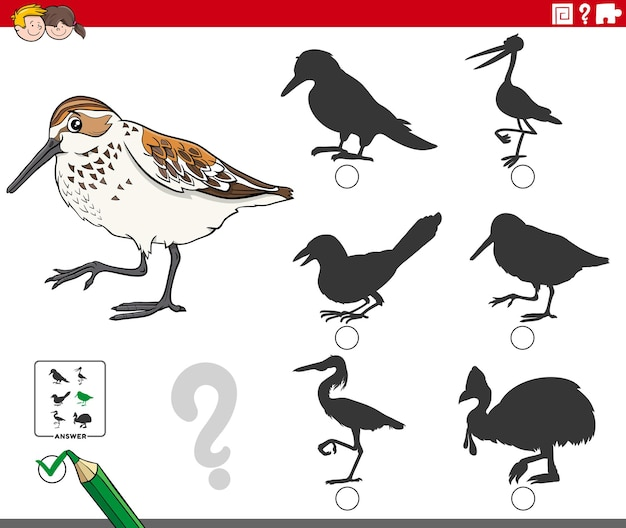 Find the right shadow to the game for children with western sandpiper bird