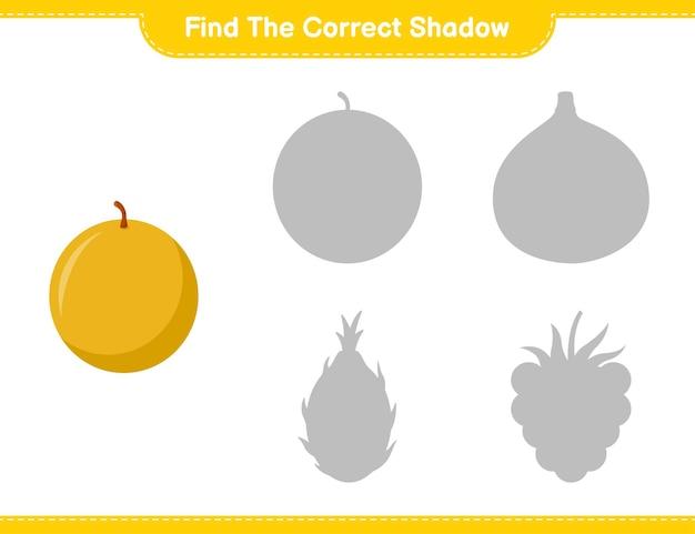 올바른 그림자를 찾으십시오. 허니 멜론의 정확한 그림자를 찾아 일치시킵니다. 교육용 어린이 게임, 인쇄 가능한 워크 시트