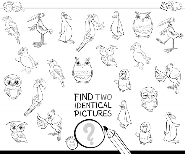 Find two identical bird pictures coloring book