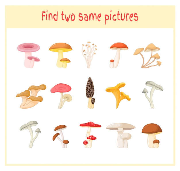 Finding two exactly the same pictures mushrooms