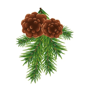 Fir branch and brown cones isolated on white background, christmas decoration.