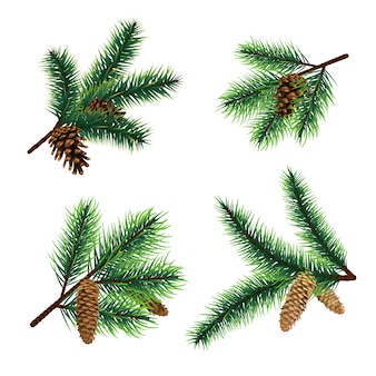 Fir branch christmas tree branches with cones