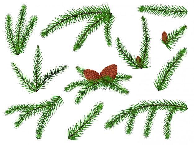 전나무 지점. 크리스마스 트리, 소나무 장식, 콘과 함께 침 엽 수. 무성 한 전나무 분기 휴일 녹색 장식 세트 격리. 벡터 상록 숲 식물 나뭇 가지 요소 그림