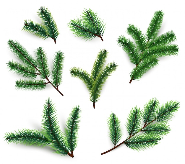 Fir branches. christmas tree branching isolated. 3d realistic conifer branch set for winter holiday decoration. vector collection