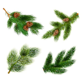 Fir and pine trees branches icons set