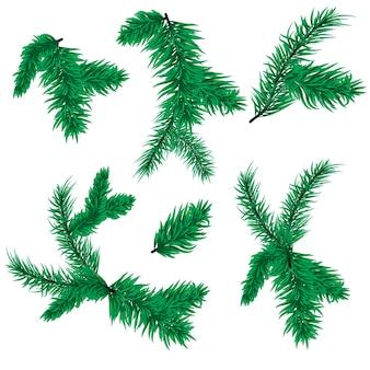 전나무 트리 분기 벡터 크리스마스 가문비나무 상록 자연 겨울 휴가 흰색 배경에 고립. 소나무 가지 크리스마스 식물 전통적인 firtree 장식 바늘 나뭇가지.