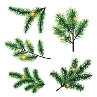 흰색 배경에 고립 된 조명 벡터와 전나무 나무 가지