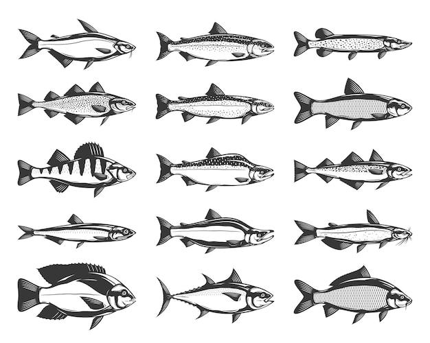 Иллюстрации рыбы, изолированные на белом фоне