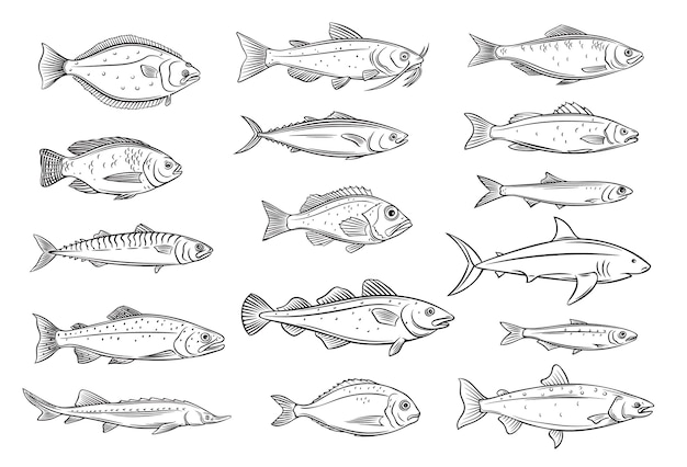魚の輪郭。鯛、サバ、マグロまたはコチョウザメ、ナマズ、タラ、オヒョウの刻まれたシーフード。ティラピア、アラスカメヌケ、イワシ、アンチョビ、スズキ、ドラドを描きます。レトロなスタイル