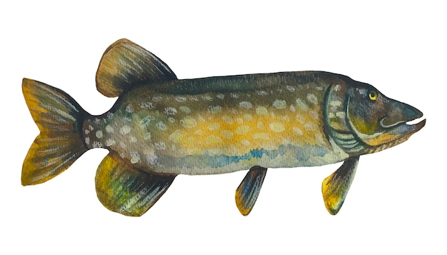 Fish pike.watercolor painting.