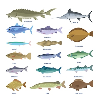 魚セット。水生動物のコレクション。チョウザメとコイ、パイクとマグロ。水中の生き物。
