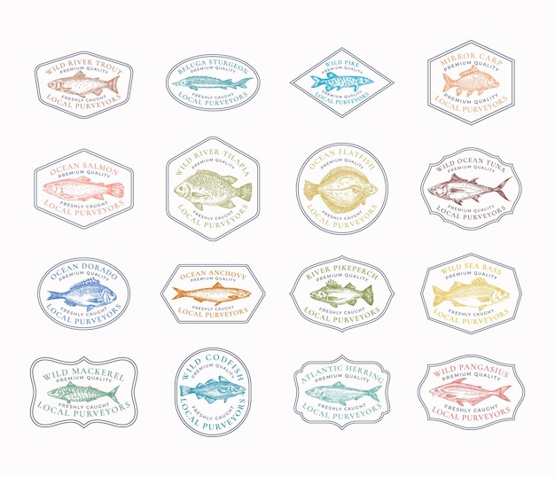 Fish vintage frame badges or logo templates collection. hand drawn river and ocean fishes sketch emblems bundle with retro typography.