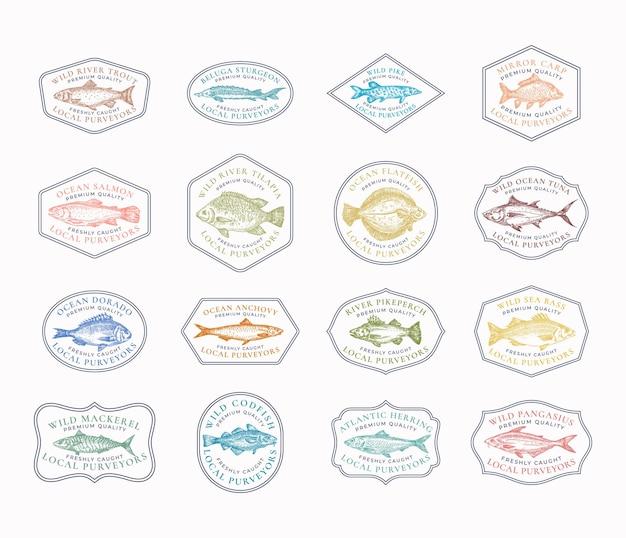 물고기 빈티지 프레임 배지 또는 로고 템플릿 컬렉션. 손으로 그린 강과 바다 물고기 스케치 엠블럼 번들 복고풍 타이포그래피.