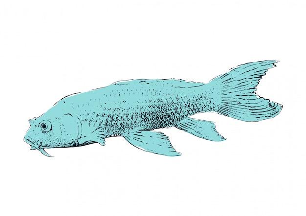 Fish wood block print, japanese style, koi fish emperor vector illustration