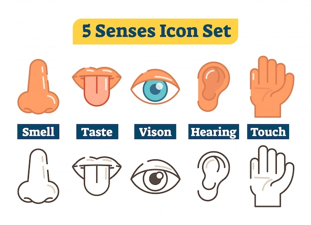 Five human body senses. vector flat illustration icon collection.