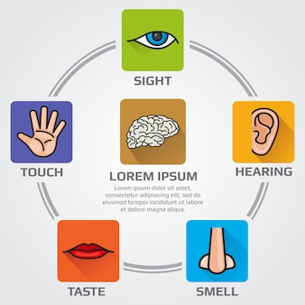 Five human senses smell, sight, hearing, taste, sensory infographics with nose, hand, mouth