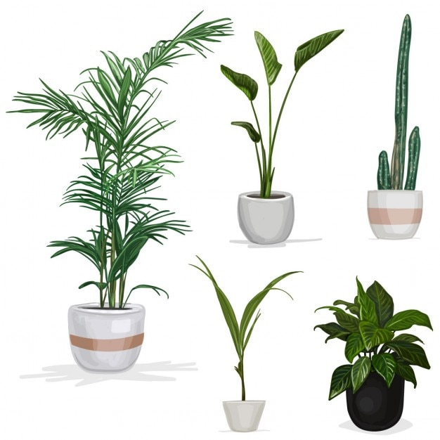 plants vectors photos and psd files free download rh freepik com vector plants illustrator vector plant leaves