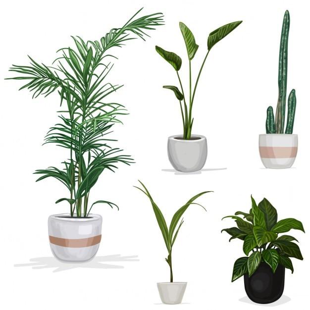 Five realistic plants  sc 1 st  Freepik & Flowerpot Vectors Photos and PSD files | Free Download