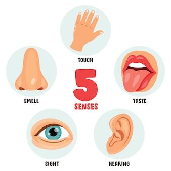 Концепция пяти чувств с человеческими органами для детей