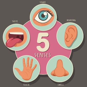 Five senses of a human: sight, hearing, smell, taste and touch. vector cartoon icons of eyes, nose, mouth, ear and hand isolated