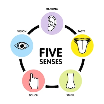 Five senses line icons.