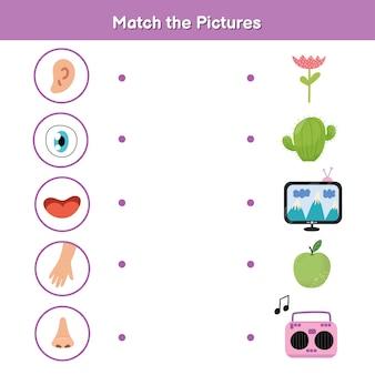 子供のための五感マッチングゲーム。視覚、触覚、聴覚、嗅覚、味覚。写真のアクティビティページに一致します。就学前の体の部分の材料を学ぶ。子供のためのワークブック。ベクトルイラスト