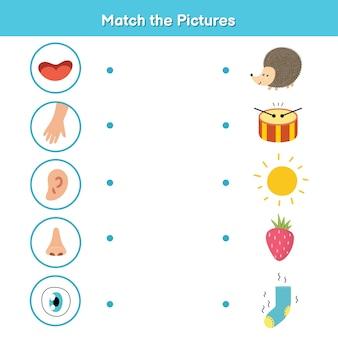 아이들을위한 오감 매칭 게임. 시각, 촉각, 청각, 냄새 및 맛. 사진 활동 페이지를 일치시킵니다. 유치원 용 신체 부위 자료 학습. 어린이를위한 워크 북. 벡터 일러스트 레이 션