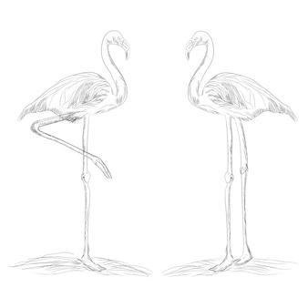 フラミンゴ鳥のスケッチ
