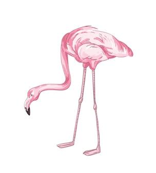플라밍고 손으로 그린 벡터 일러스트 레이 션. 핑크 열 대 조류 색상 그리기입니다. 아프리카 동물군 대표, 현실적인 붉은 깃털. 이국적인 야생 동물, 흰색 배경에 고립 된 귀여운 버디.