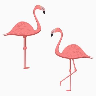 플라밍고. 핑크 이국적인 열 대 새의 집합입니다. 벡터 일러스트 레이 션.