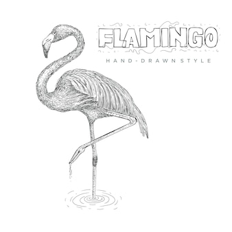 Flamingo standing on the water using one leg. hand drawn animal illustration