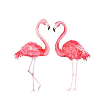 Flamingo. watercolor tropical bird. illustration