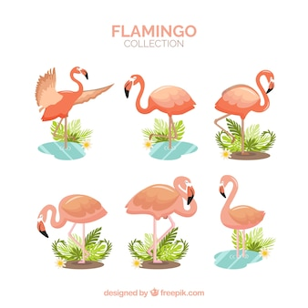 Flamingos collection with different postures in flat style