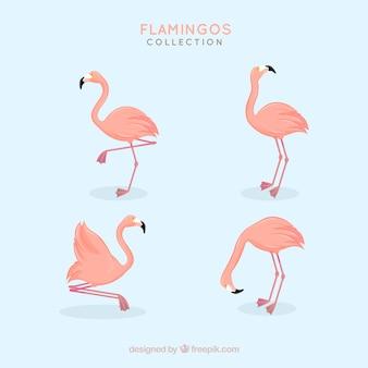 Коллекция фламинго с различными позами в плоском стиле