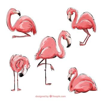 Коллекция фламинго с различными позами в акварельном стиле