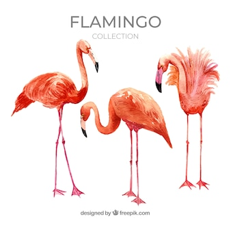 Flamingos collection with different postures in watercolor style