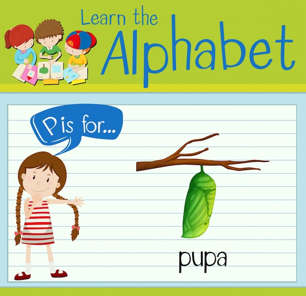 Flashcard letter p is for pupa