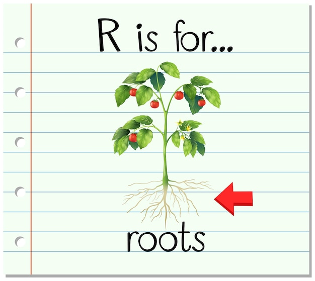 Flashcard letter r is for roots