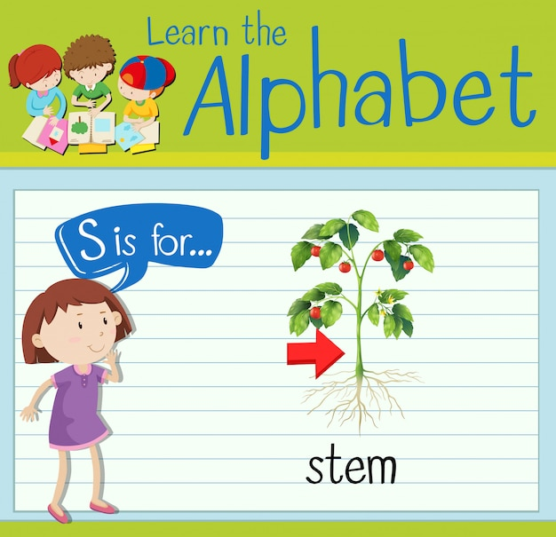 Flashcard letter s is for stem