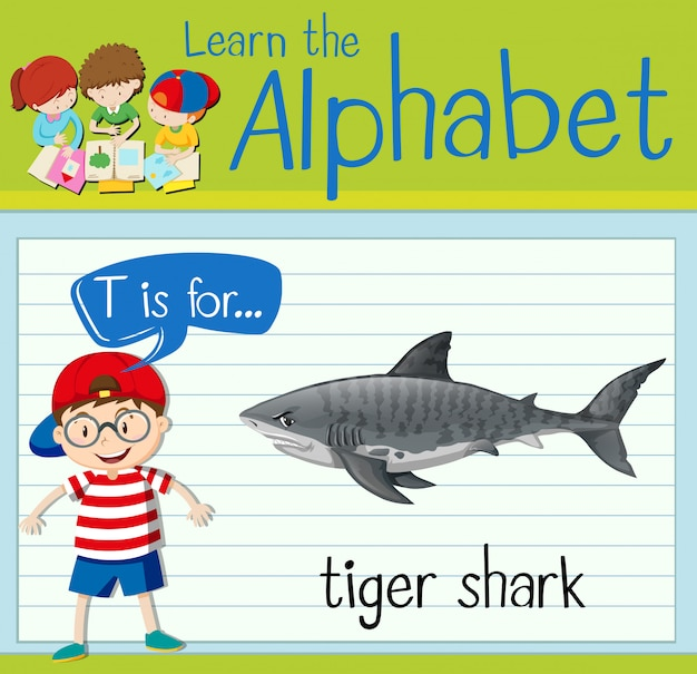 Flashcard letter t is for tiger shark
