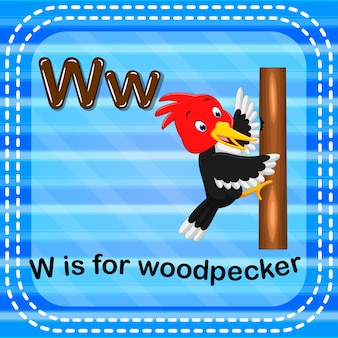 Flashcard letter w is for woodpecker
