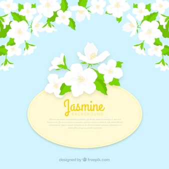 Flat background with jasmine flowers